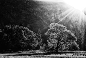 Fine Art Funday – Yosemite nationalpark.